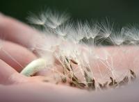 Wie deine Wünsche in Erfüllung gehen und du ein glückliches Leben führst