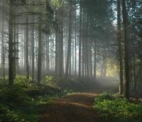 Der Weg der Seele