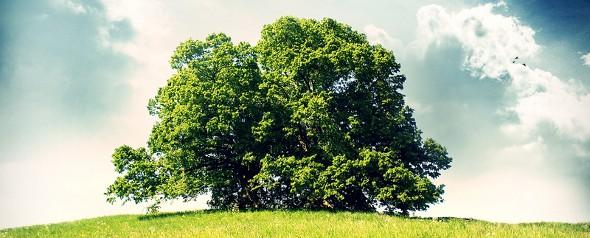 Bleibe dir treu wie der Baum