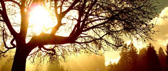 Was ist der Sinn eines Baumes