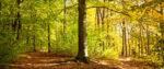 Ein paar Vorteile der Meditation – ein Bericht